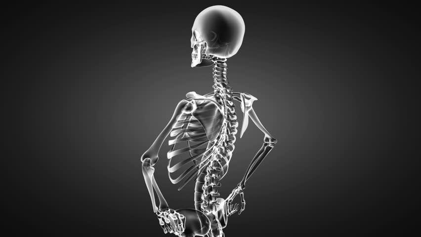 Loop rotate skeleton | Shutterstock HD Video #4477226
