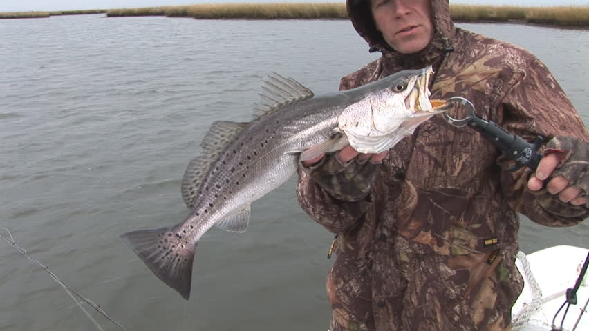 Fisherman catching large Speckled Trout in Louisiana Marsh post Hurricane