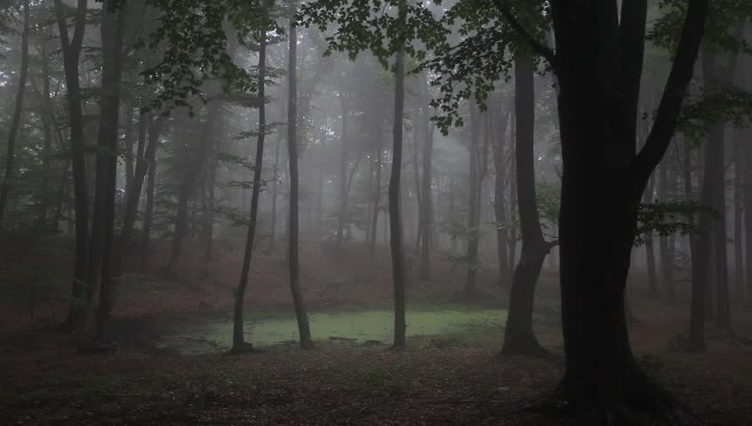 Foggy Forest With Rain Drops Sound Stock Footage Video 4560704 ...