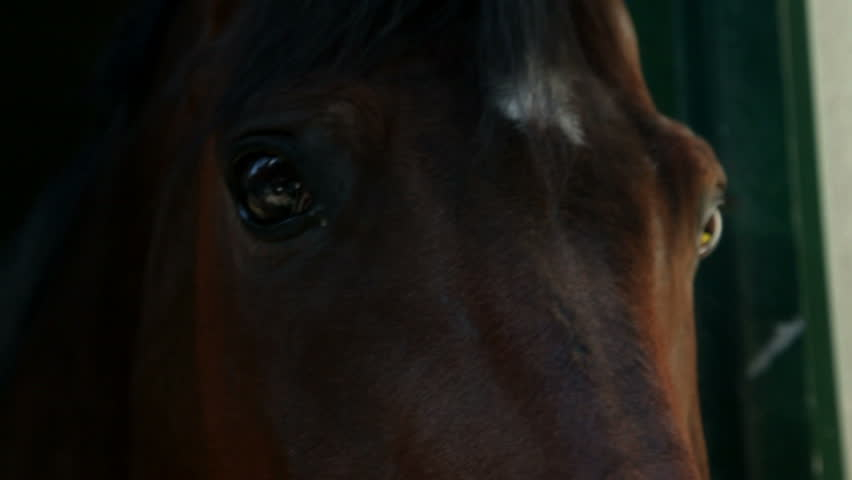 Extreme close up on brown horse eyes | Shutterstock HD Video #4602638