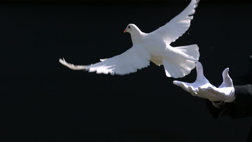 Magician releases dove from hands, slow motion
