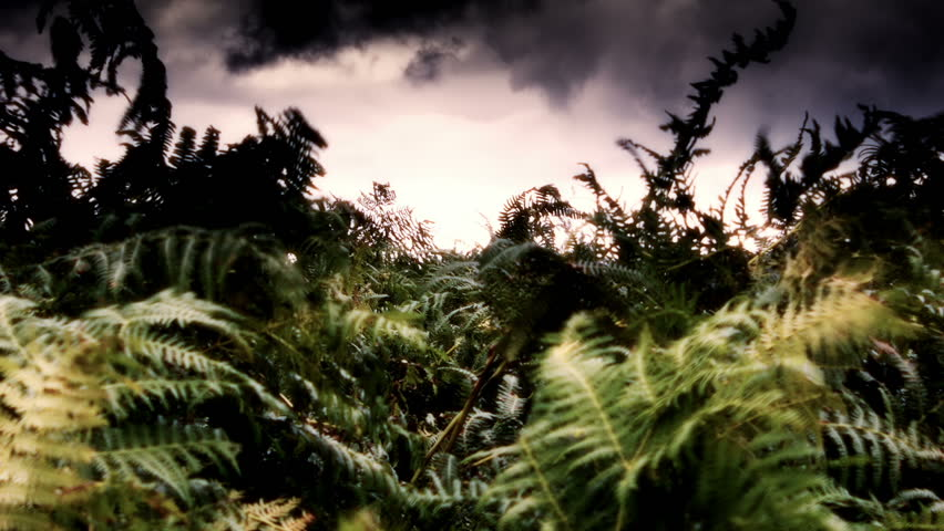 Blowing Fern Plants Set Against A Dramatic Sky On A Yorkshire Moor.  Shot with the Blackmagic Cine Cam using uncompressed RAW and a 16bit pipeline for Broadcast Quality.