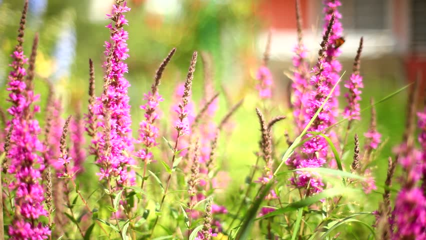 butterflies pollinate flowers