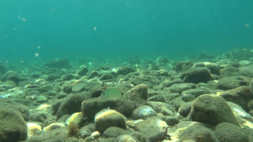 Sea Bottom Of The Sea Fish Seabed Sea: Stock Video Of Fish Swimming Underwater At The Ionic