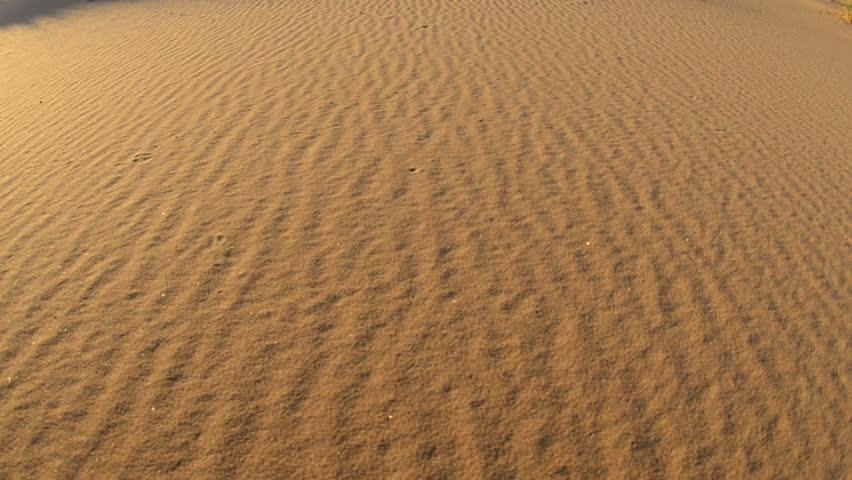 Pan of Golden Sand Dunes - Mojave Preserve National Park #4863668