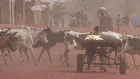 MALI-CIRCA 2012-Shepherds lead their animals through Sahara desert town in Mali.