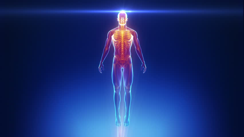 Male anatomical medical scan in loop | Shutterstock HD Video #4886273