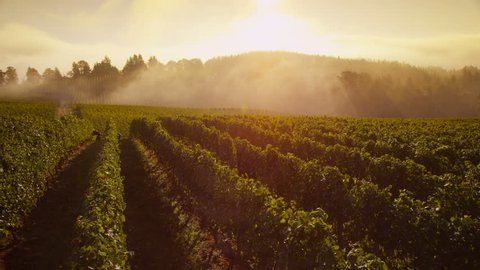 Time lapse of fog rolling over Oregon vineyard at sunrise
