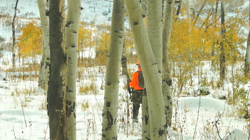 Elk Hunting in northern Colorado, Hunter stalking in blaze orange, October after