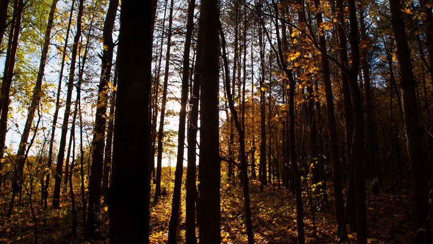 Beautiful autumn forest with sun shining - dolly shot | Shutterstock HD Video #4908536
