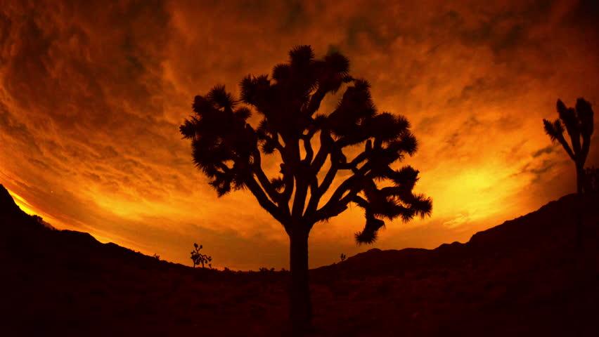 Time Lapse of Joshua Trees at Night  - 4K