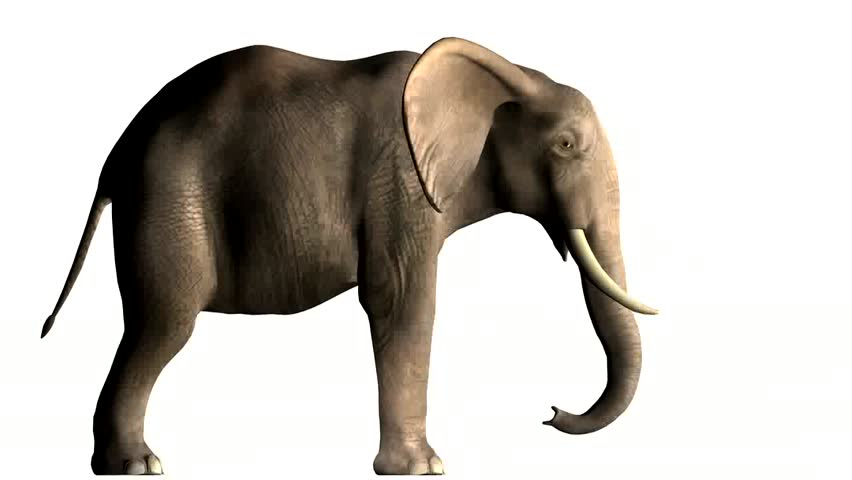 African Elephant side view animation on clean white background. Eye and trunk action