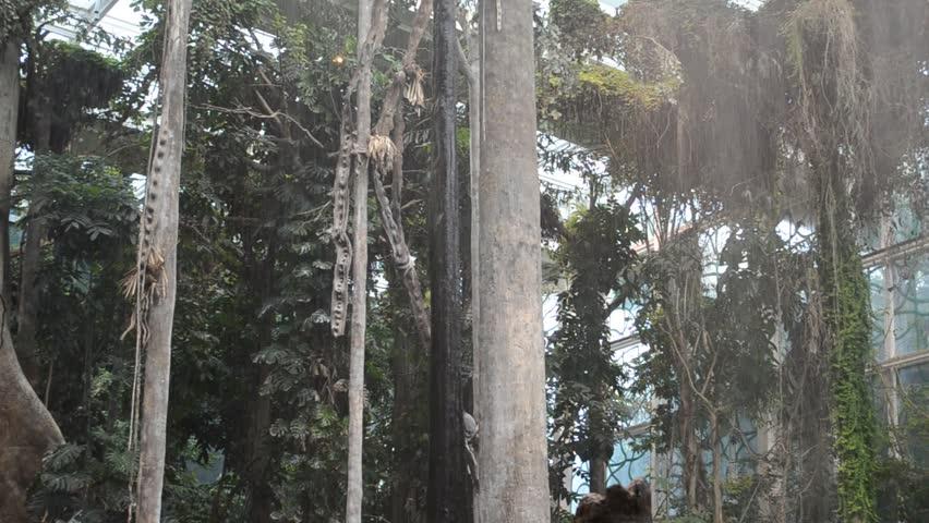 It is artificial the created jungle in Museu de la Ciencia CosmoCaixa in Barcelona #5002736