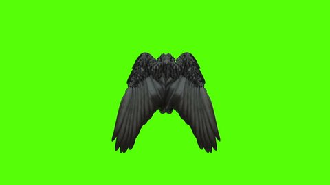Wings open and close on green screen containing alpha channel. Pack of three. Black, white and gray. Loop able.