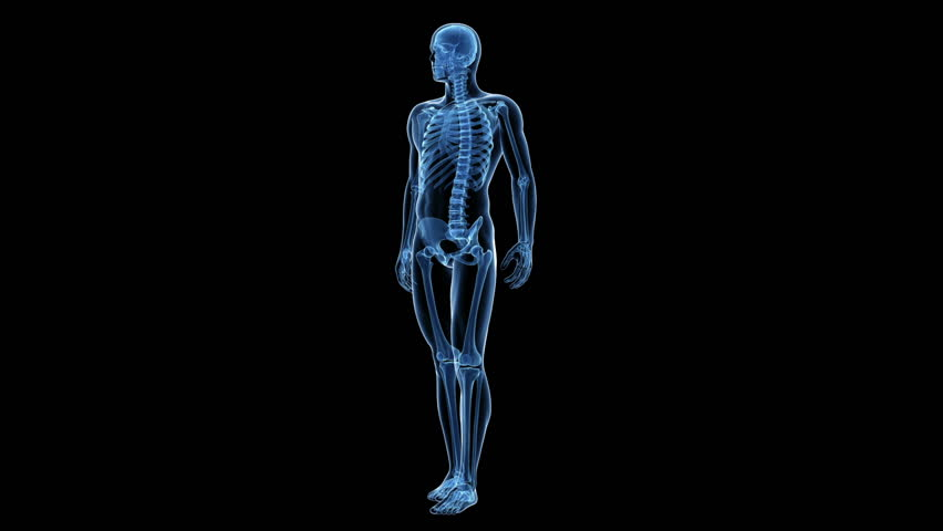 animation showing the human skeletal system stock footage video, Skeleton