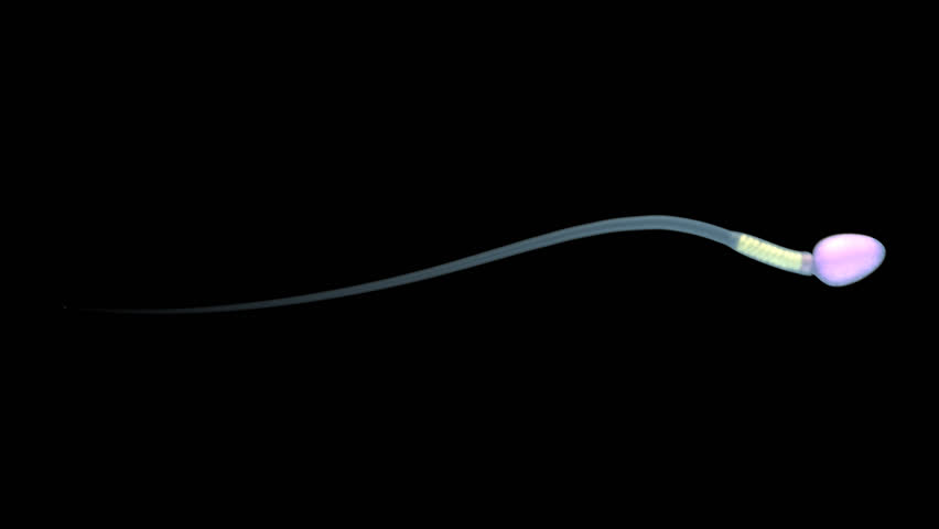Single sperm. Contains alpha channel.