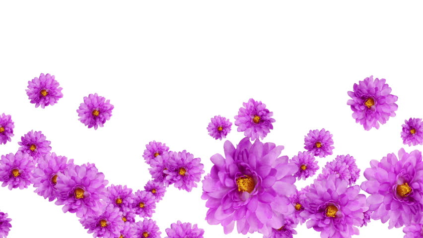 animated border of purple flowers daisy with vine