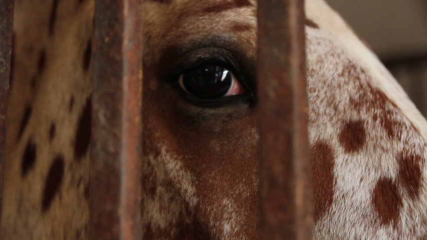 Horse looking through bars. Close up of eye