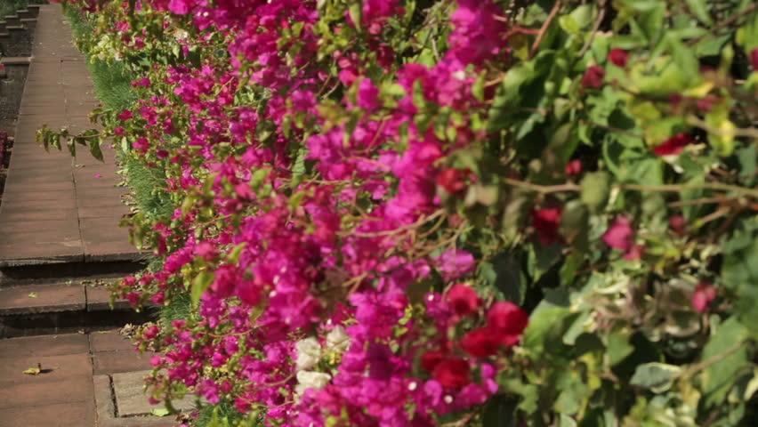 Funchal Madeira Portugal November 14 Pan Of Botanical Garden On