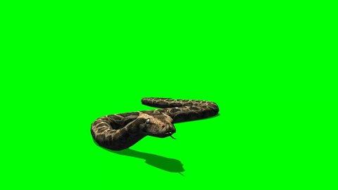Snake - python crawl on the ground - Animal Green Screen Video Footage