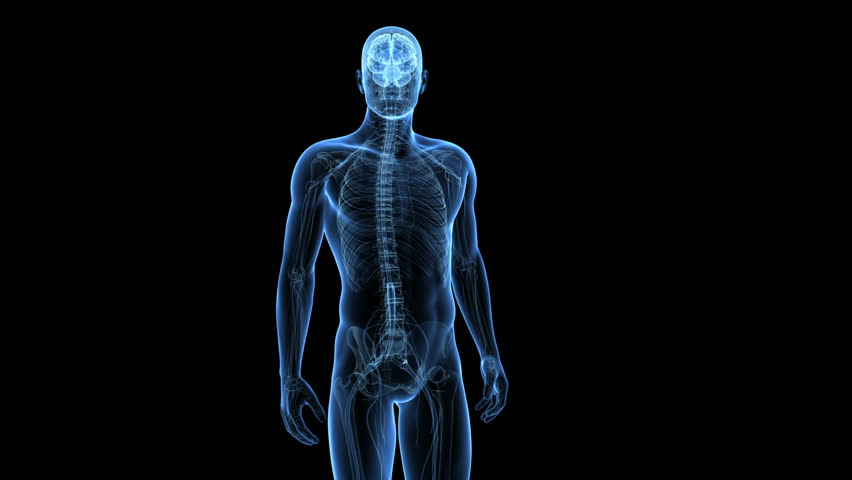 Spinal Cord Royalty-Free Stock Video in 4K and HD | Shutterstock