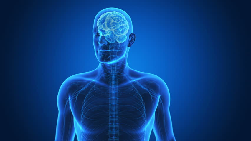 Nervous System Royalty Free Stock Video In 4k And Hd Shutterstock