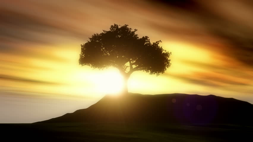 Solitary Silhouetted Tree Animation.