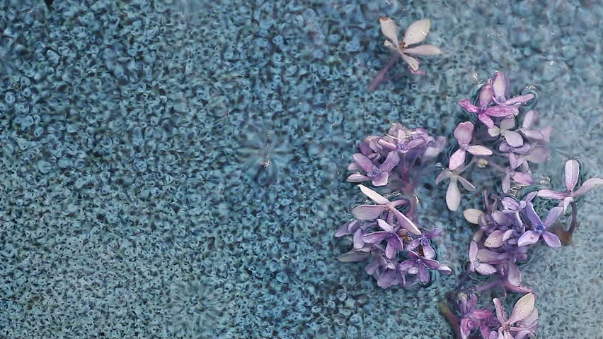 hydrangea florets in a ceramic dish with water