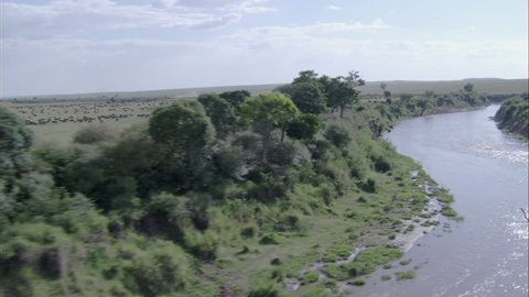 Wildebeest Savanna River Migration. A scenic view travels over a herd of wildebeest in Africa. The scene captures the powerful creatures running through the savannas of the region.