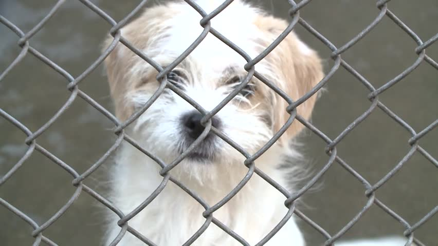 Sad Puppy Eyes Stock Video Footage 4k And Hd Video Clips