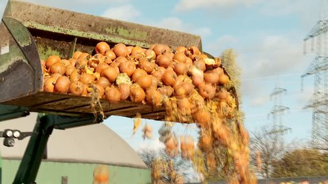 Video footage of a loading food over production of pumpkins with a tractor