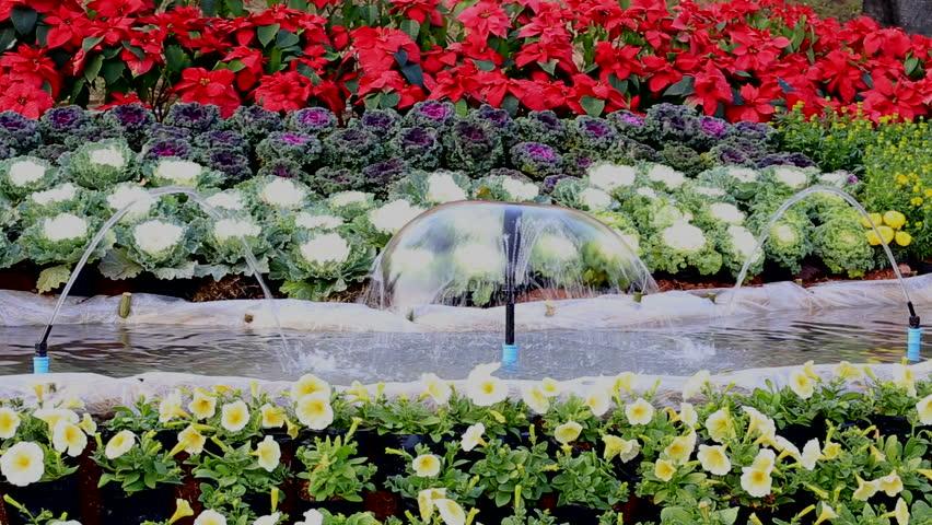 Fountain In The Garden Fl Background Hd Stock Video Clip