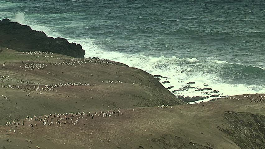 Chinstrap penguins colony #5634251