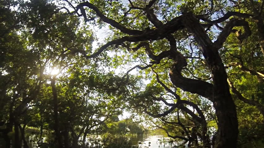 mangrove forest near Tonle Sap lake in Cambodia at slow motion