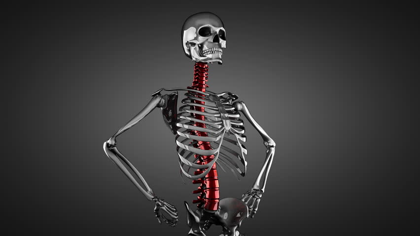 human skeleton model rotate stock footage video 5784662 | shutterstock, Skeleton