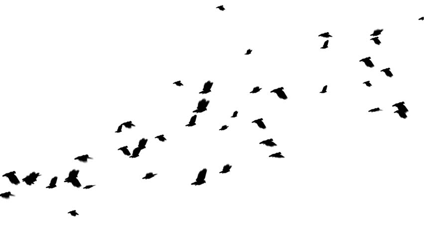A large flock of pigeons flies from left to right. Digitally generated and seamlessly loop-able.