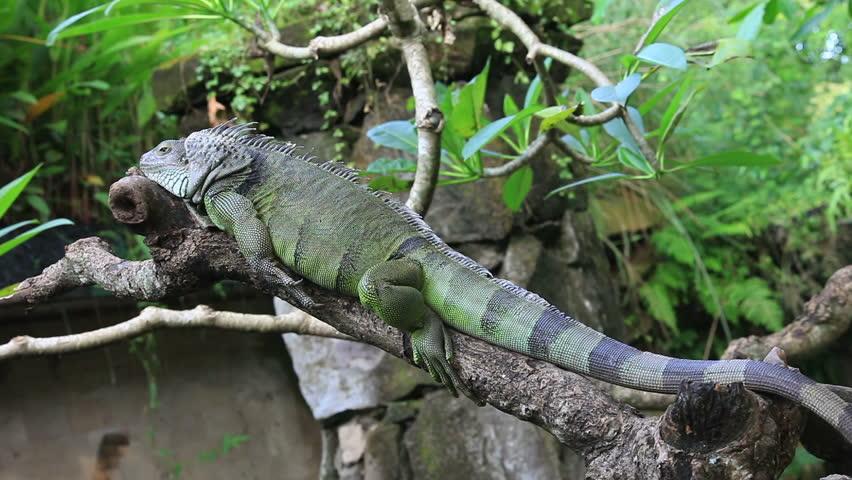 Header of Reptilia