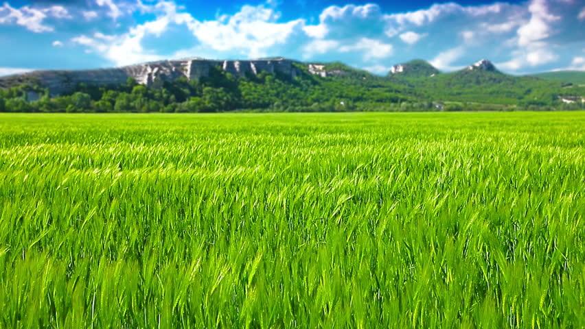 green field and cloudy sky. 4K. FULL HD, 4096x2304.