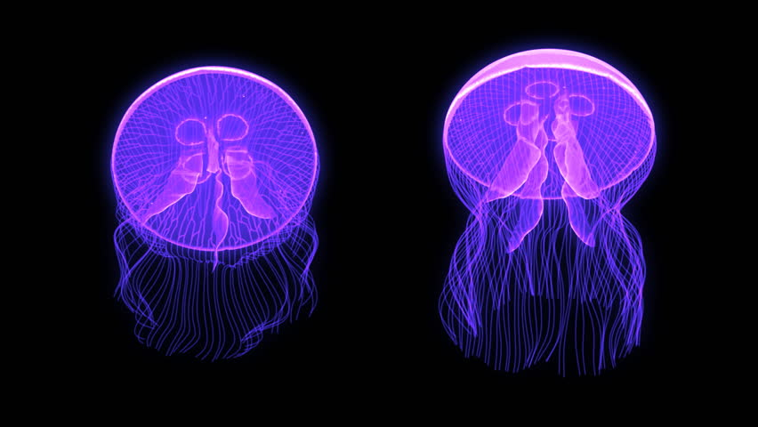 Jellyfish Nightlights looping assets isolated on a blank background.  Available in 5 colors, each color is available on a black or white background.