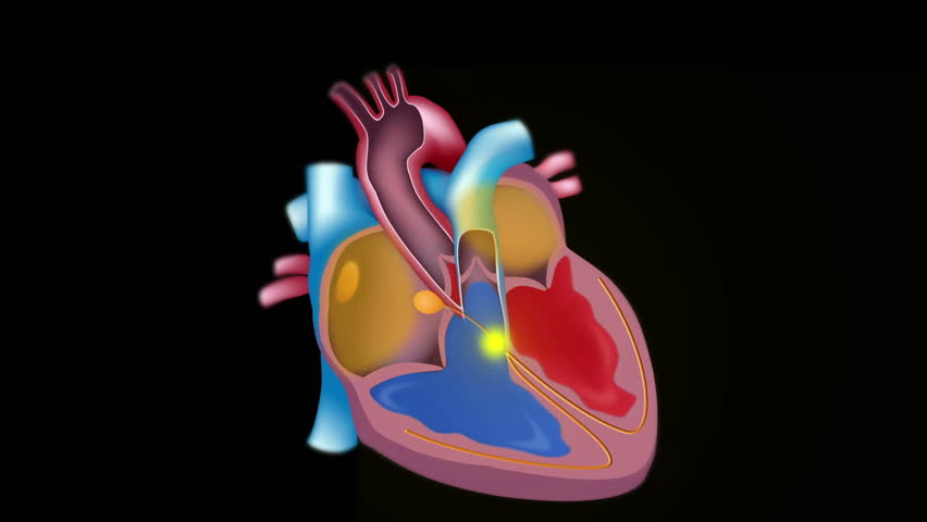 Electrical activity of the heart illustrated on top of the blood flow, seamless loop.