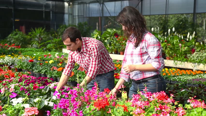 garderners working at nursery hd stock footage clip. beautiful ideas. Home Design Ideas