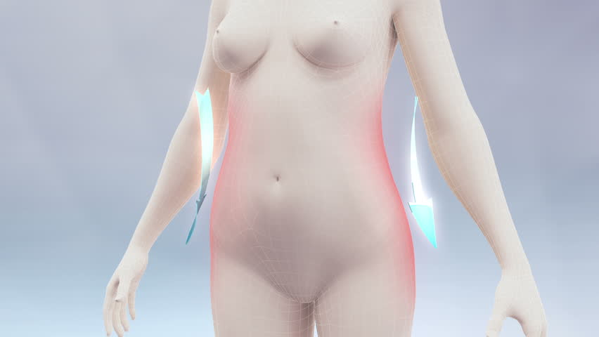 Slim body animation. Three high quality animation showing the process of weight loss and vanishing of body fat. Best for you commercial movie, video presentation and other production. | Shutterstock HD Video #6269204