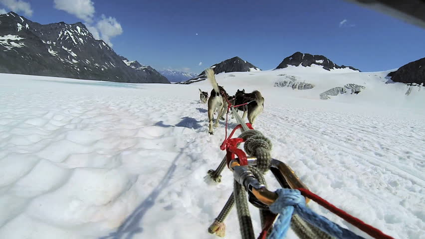 POV view of dogsledding Chugach Mountains, Alaska, - POV Husky dogsledding team working Chugach mountain range, Alaska, USA | Shutterstock HD Video #6312176