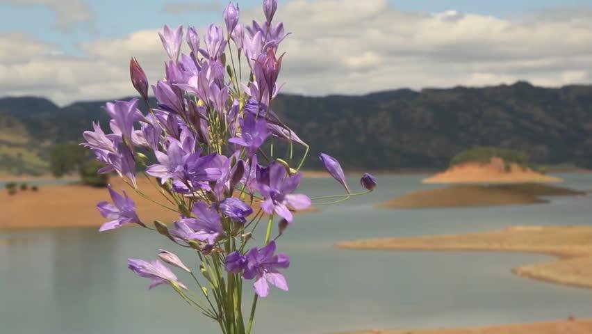 Stock video of bouquet of little purple flowers in | 6367796 ...