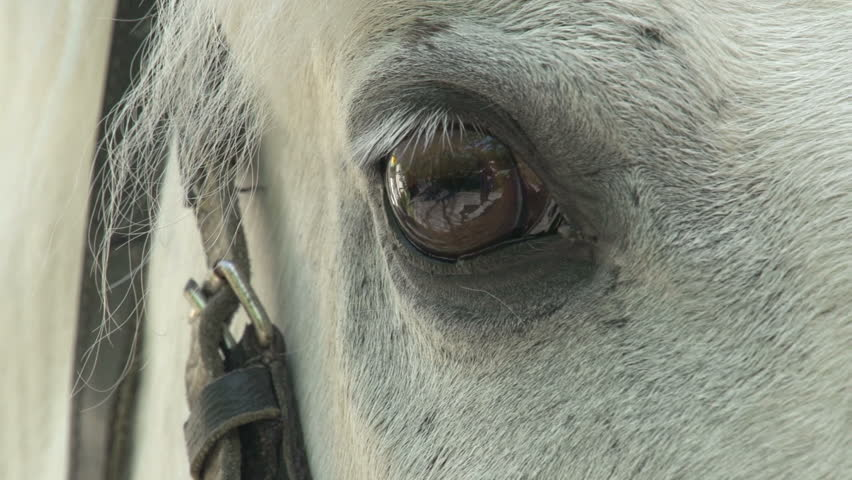 Header of Equine