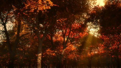 Autumn forest at sunset with sun rays. Camera tracks slowly.