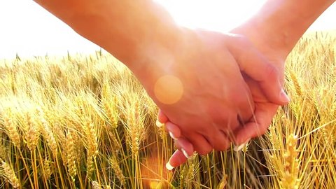 Young couple walking across the wheat field, close-up male and female holding hands,flare light, unrecognizable people.Sunset, high speed camera, slow motion