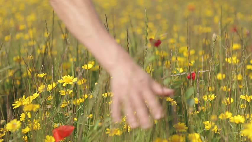 Hand touching Grass - Flower field - Daisy - Poppy - Yellow - Red | Shutterstock HD Video #6676616