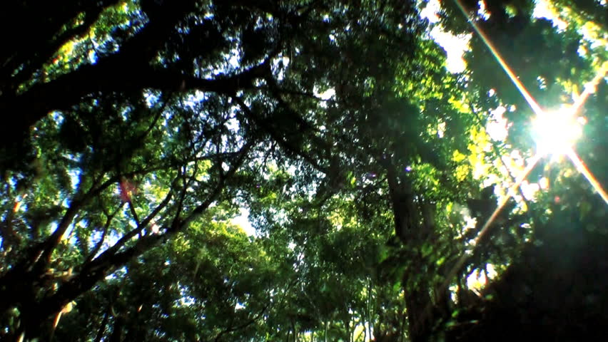 Point-of-view fish eye driving  through tropical rain forest trees