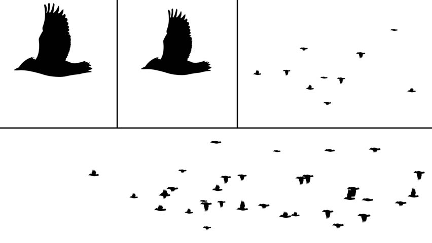 Bird flocks to use in your project. Just animate flock to move across frame